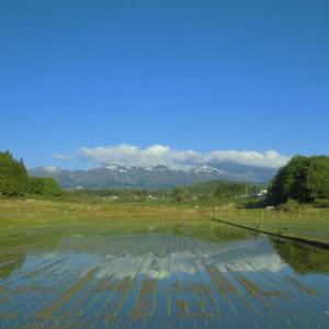 早苗田の風なき朝の安達太良嶺