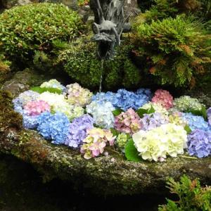 紫陽花を求め集うてウオーキング