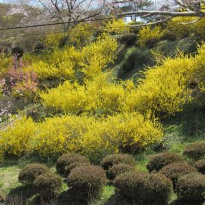 満開のさつきの山の花祭り