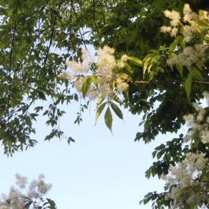 緑さす上枝をわたる峰の風(みどりさすほずえをわたるみねのかぜ)