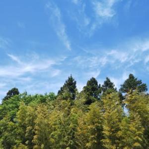 振り返るそらは青空竹の秋