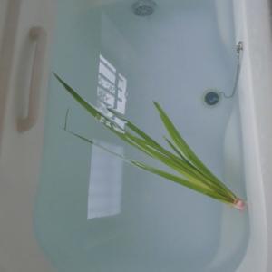 そこにある菖蒲引き抜き菖蒲風呂