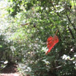 人間の気配さっして秋の蜘蛛