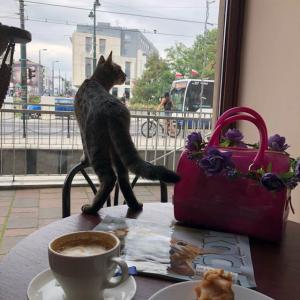 ポーランドの猫カフェ