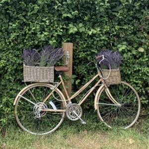 イングランド最大のラベンダー畑とラベンダーオイルの作り方とその効果を紹介!