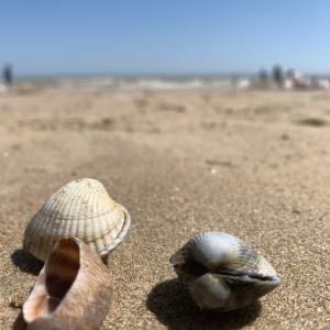 イギリスの観光地 密、密、密 〜密を避けて穴場ビーチへ〜