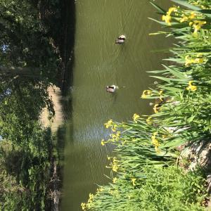 今のKew garden とルバーブで練り梅