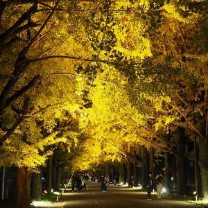 https://moto8log.com/park-botanical-garden/showakinen-park-autumn-evening-walk2019
