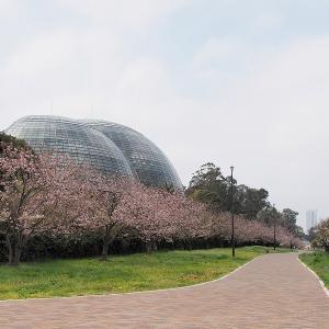 夢の島公園・夢の島熱帯植物園