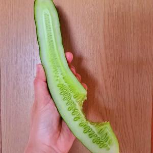 第2子の胡瓜