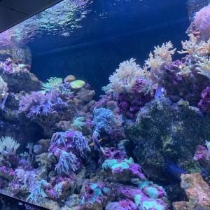 サボって水族館