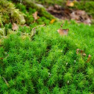 苔の森から白駒の池へ    2
