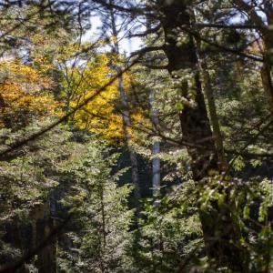 苔の森から白駒の池へ 3