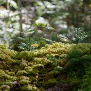 苔の森から白駒の池へ 4