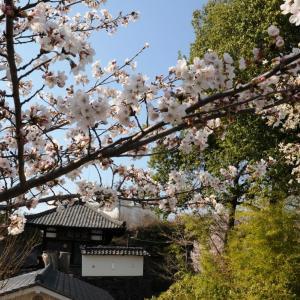 令和2年懐古園桜百景 1