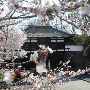令和2年懐古園桜百景 2