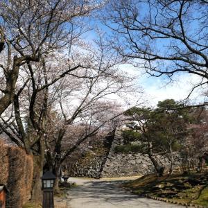 令和2年懐古園桜百景 4