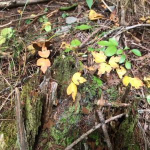 美笹の小さい秋 1