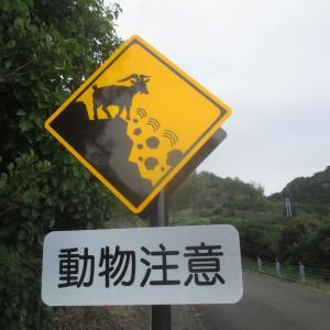 【旅のコラム】はじめての小笠原諸島 旅行記 その9~陸のツアー~