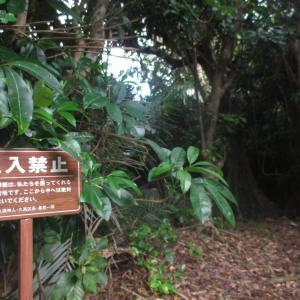 琉球開闢七御嶽「フボー御嶽」へ。アマミキヨが上陸した地 久高島~九州・沖縄の島を巡る旅 その19~