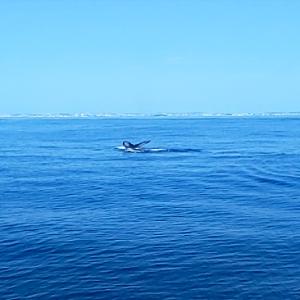 沖縄旅行 冬のおすすめ!ホエールウォッチングツアーに参加 2020年 5