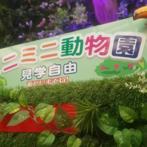 怪しい?入場無料?沖縄市にあるミニミニ動物園は想像以上に面白かった|「うちなーガイド」と行く沖縄の旅 旅行記 その6