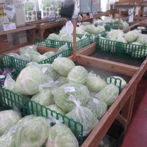 道の駅いとまん・ファーマーズマーケットで沖縄の冬野菜をゲットする。キャベツが安い!夏野菜が並ぶ?