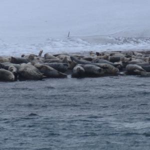 極寒の抜海港で野生のゴマフアザラシを探す!グーグルマップでアザラシの場所が分かる? | 2020年→2021年 年末年始の旅 その17