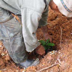 コーヒーの森を作る!苗の植樹をしました|沖縄コーヒー農園 2021年5月 旅行記