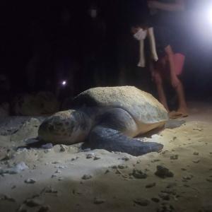 感動!沖縄でウミガメの産卵を観察する。観察のルールを徹底解説 | 2021年 旅行記その53