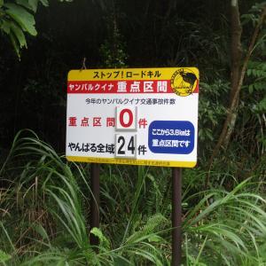 沖縄本島最北・国頭村へ。ヤンバルクイナに注意して走る | 原付沖縄本島1周2021 旅行記 その12