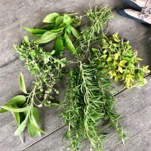庭のハーブでドライハーブ作り。残りの枝葉はお風呂用。