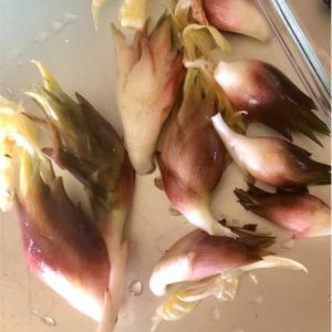 夏は薬味が大活躍!和のハーブやスパイスの代表格(茗荷・山椒・生姜・大葉・紫蘇・胡麻)と夏野菜に助けられた。