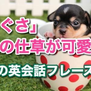 「しぐさ」は英語で?「犬の仕草がかわいい」など、英会話フレーズ16選!