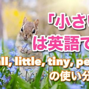 「小さい」は英語で?small, little, tiny, petiteの使い分け・例文19選!