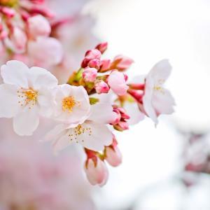 春の体調不良。私に効くのはやっぱりコレ【対策】