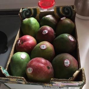【ケント種】コストコのマンゴーが優秀すぎる。