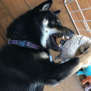 犬の拾い食い、奮闘記 2 - 飼い主の大失