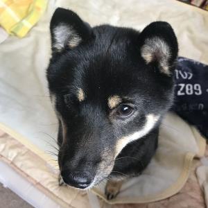 犬の拾い食い、奮闘記 - 退院後4 犬はなぜ噛むのか