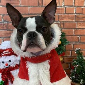クリスマスコスチューム!