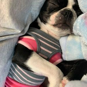 眠りの布団の姫