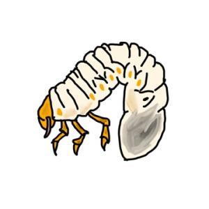素人がペイントアプリで今回は「カブトムシの幼虫」書いてみました!