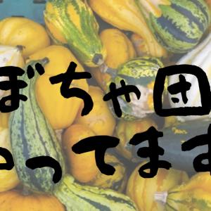 かぼちゃのお料理・かぼちゃ団子の作り方。おすすめの食べ方