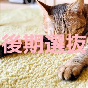 千葉県公立高校入試のシステムを知ろう! 後期選抜編