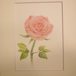 薔薇のパステルアート