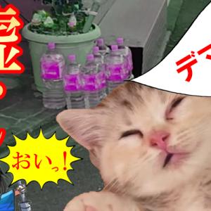 外に水入りペットボトルはエイプリルフールの有名なデマ!猫除け効果なし