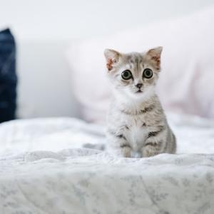 子猫に餌は一日何回あげればいいの?【最終結論】