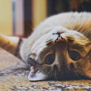 映画ボブという名の猫のネタバレやあらすじ。本人も出演?