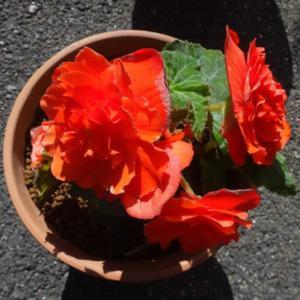 少しですが、我が家の花も綺麗です