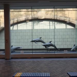 東京都:父島